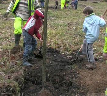Journ e de plantation d arbres volontari di lourdes - Plantation d arbres synonyme ...